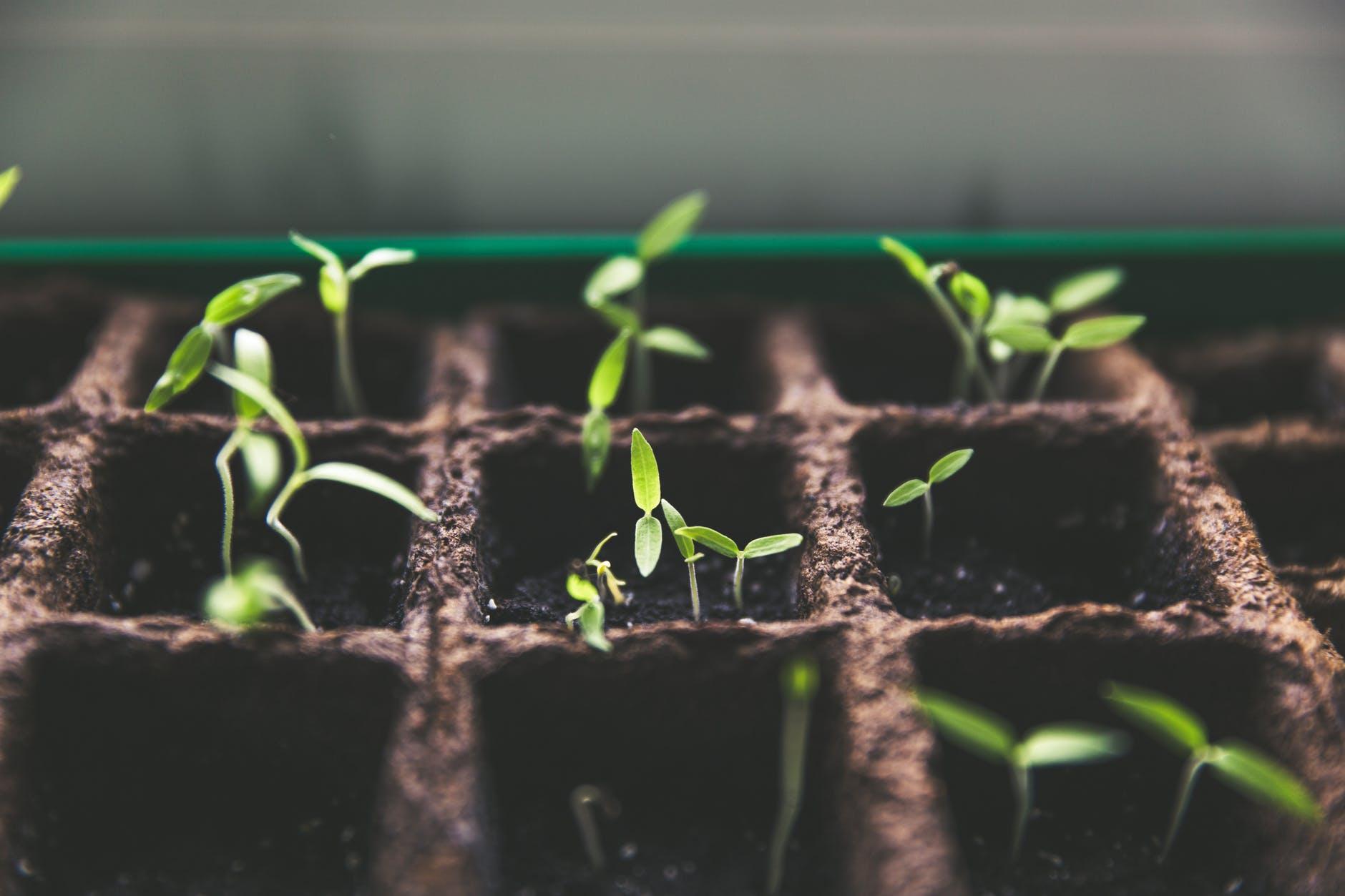 Giv dine planter gode forhold med et vægdrivhus